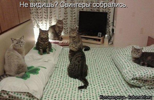 Котоматрица: Не видишь? Свингеры собрались.