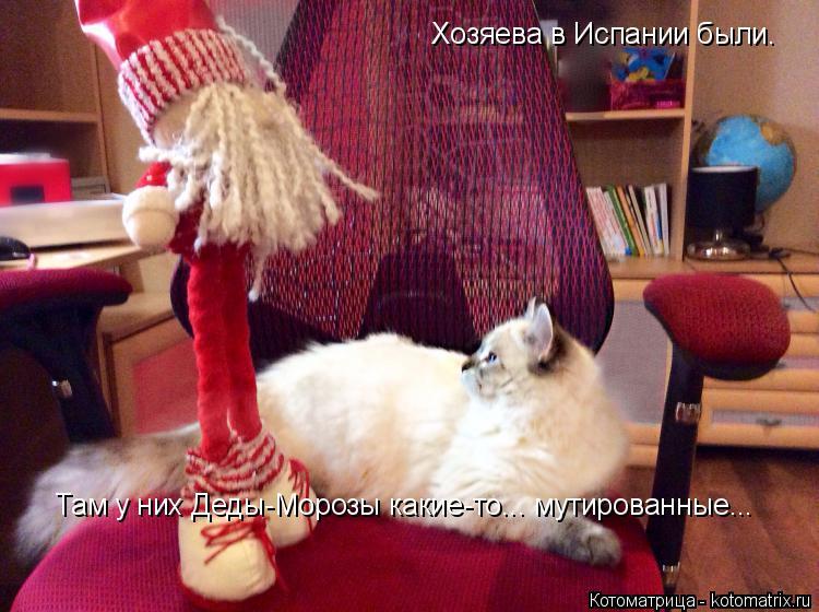 Котоматрица: Хозяева в Испании были. Там у них Деды-Морозы какие-то... мутированные...