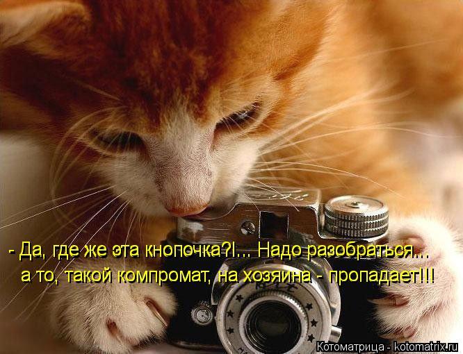 Котоматрица: - Да, где же эта кнопочка?!... Надо разобраться... а то, такой компромат, на хозяина - пропадает!!! - Да, где же эта кнопочка?!... Надо разобраться... а