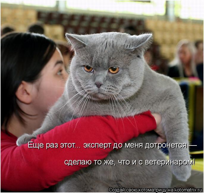 Котоматрица: Еще раз этот... эксперт до меня дотронется — сделаю то же, что и с ветеринаром!