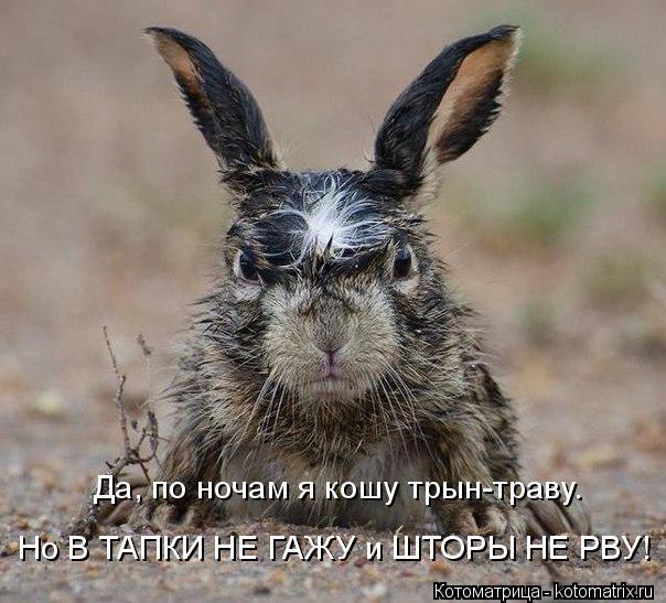 Котоматрица: Да, по ночам я кошу трын-траву. Но В ТАПКИ НЕ ГАЖУ и ШТОРЫ НЕ РВУ!