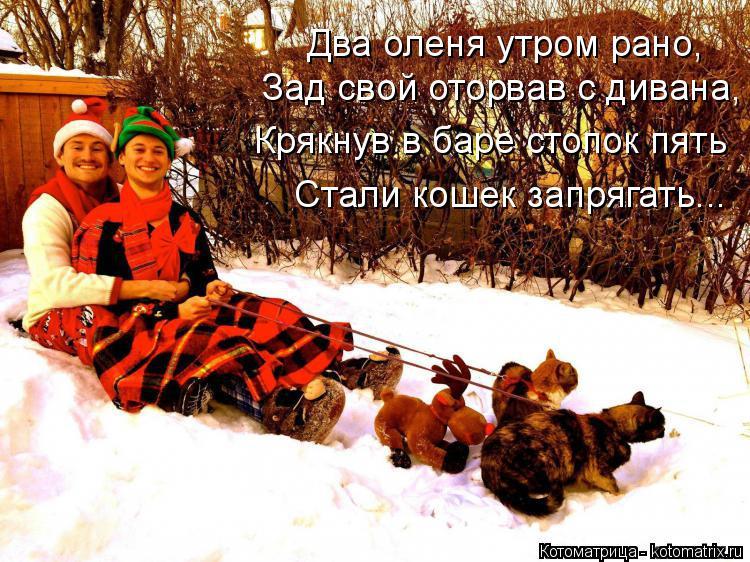 Котоматрица: Два оленя утром рано, Зад свой оторвав с дивана, Крякнув в баре стопок пять Стали кошек запрягать...