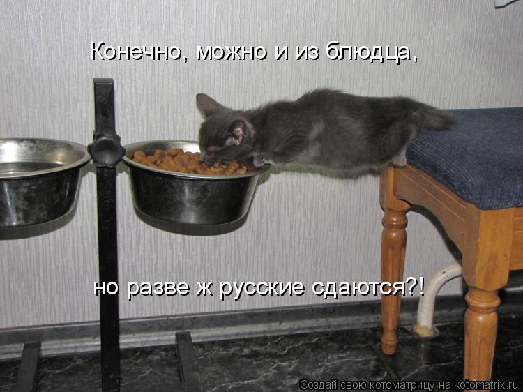 Котоматрица: Конечно, можно и из блюдца, но разве ж русские сдаются?!