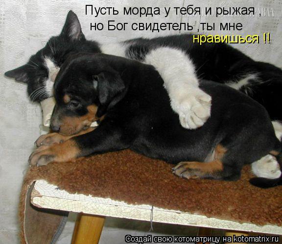 Котоматрица: Пусть морда у тебя и рыжая , но Бог свидетель ,ты мне нравишься !!