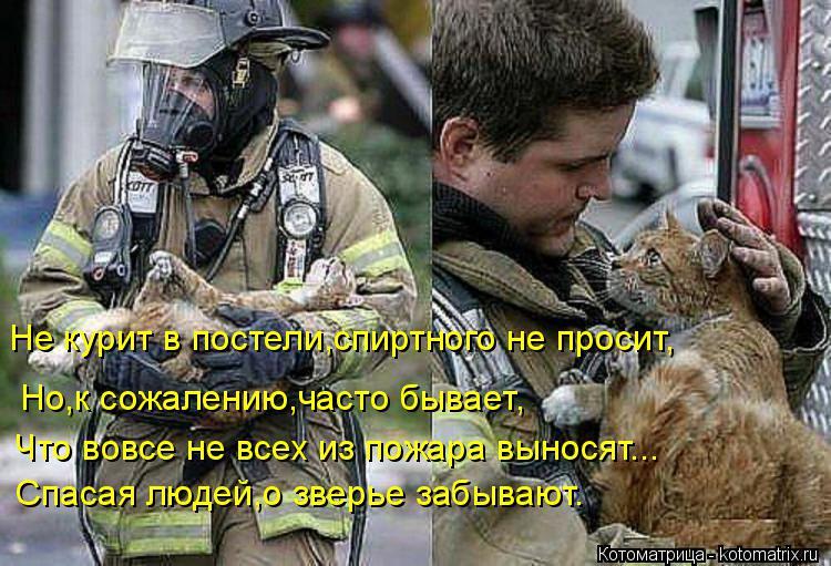 Котоматрица: Не курит в постели,спиртного не просит, Спасая людей,о зверье забывают. Что вовсе не всех из пожара выносят... Но,к сожалению,часто бывает,