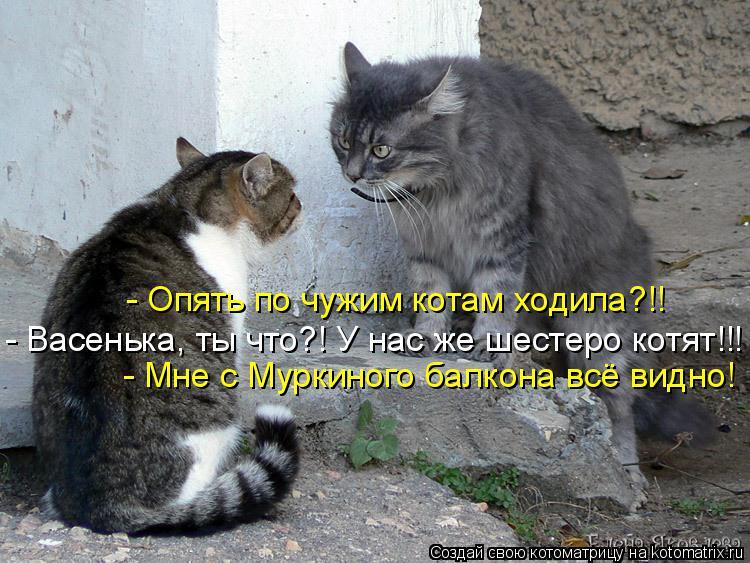 Киркорова строго в доме нет кошки долго не живут душа- как яркие