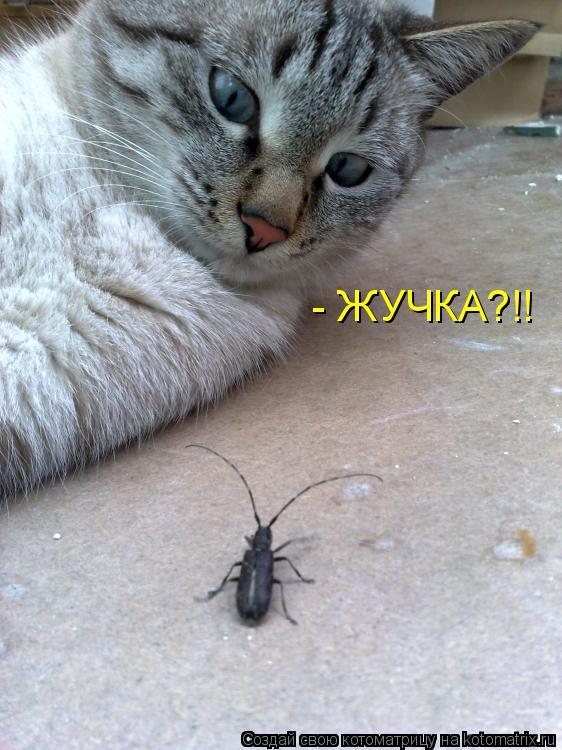 Котоматрица: - ЖУЧКА?!!