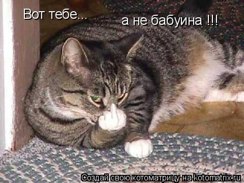 Котоматрица: Вот тебе... а не бабуина !!!