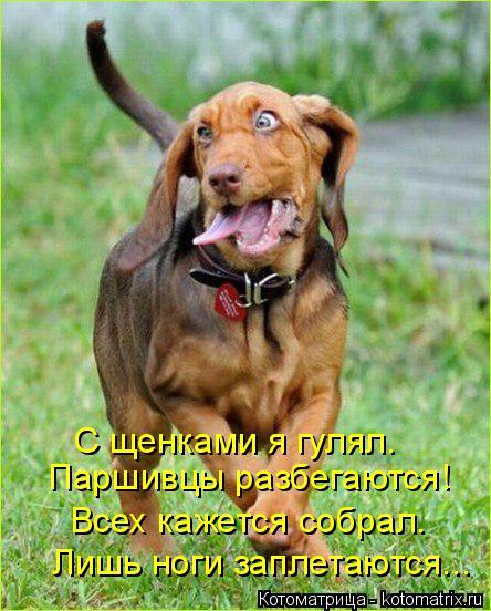 Котоматрица: Паршивцы разбегаются! С щенками я гулял. Всех кажется собрал. Лишь ноги заплетаются...