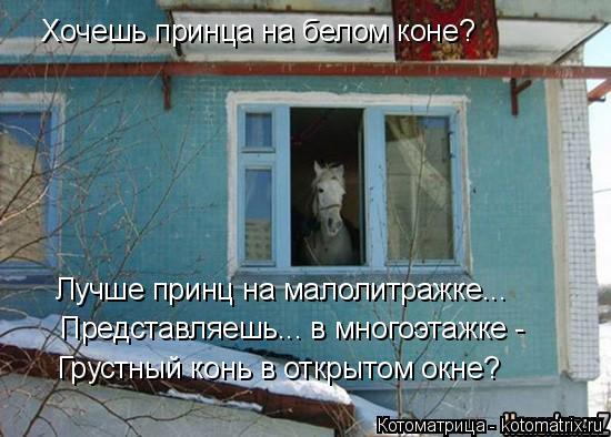 Котоматрица: Хочешь принца на белом коне? Лучше принц на малолитражке... Представляешь... в многоэтажке - Грустный конь в открытом окне?