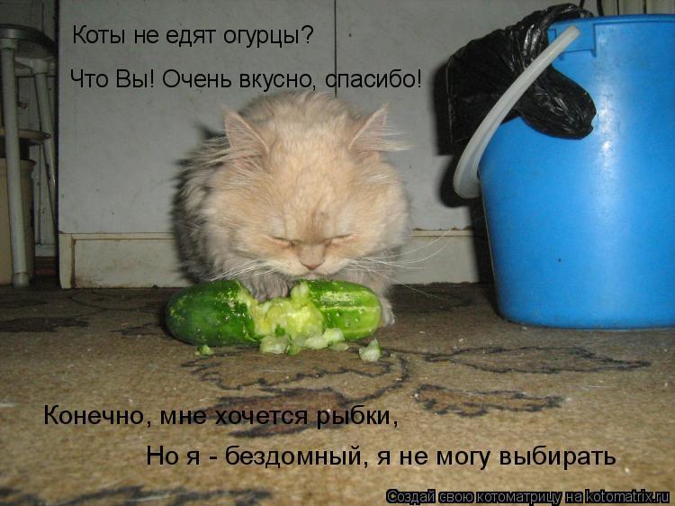 Котоматрица: Коты не едят огурцы? Что Вы! Очень вкусно, спасибо! Конечно, мне хочется рыбки, Но я - бездомный, я не могу выбирать