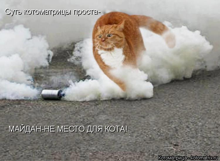 Котоматрица: Cуть котоматрицы проста- МАЙДАН-НЕ МЕСТО ДЛЯ КОТА!