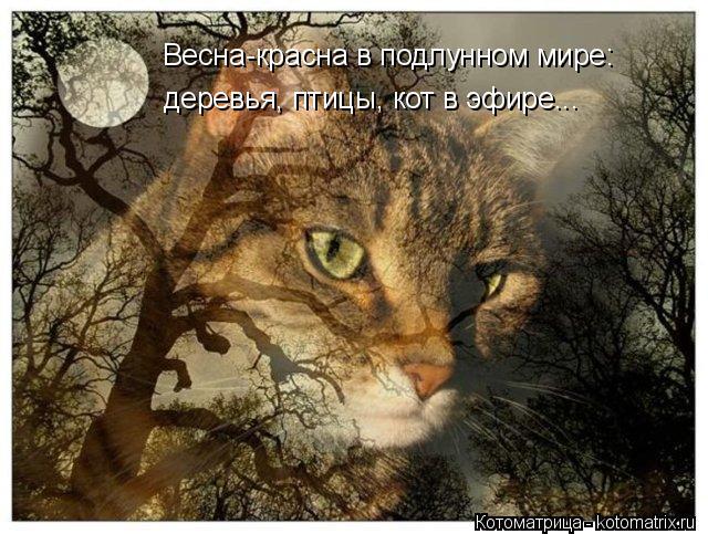 Котоматрица: Весна-красна в подлунном мире: деревья, птицы, кот в эфире...