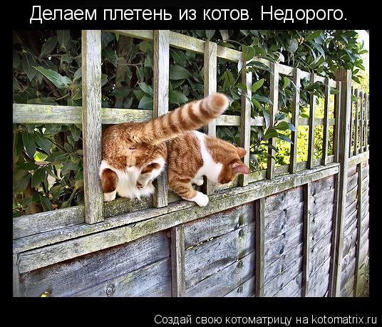 Котоматрица: Делаем плетень из котов. Недорого.