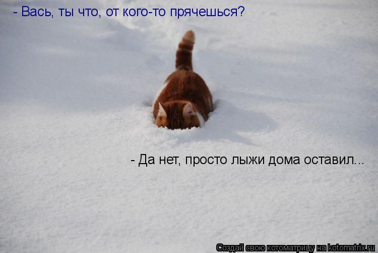 Котоматрица: - Вась, ты что, от кого-то прячешься? - Да нет, просто лыжи дома оставил...