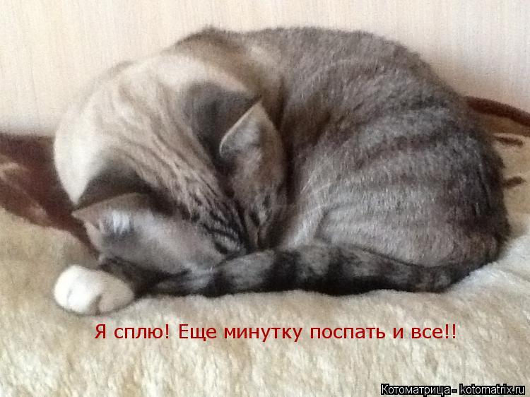 Котоматрица: Я сплю! Еще минутку поспать и все!!