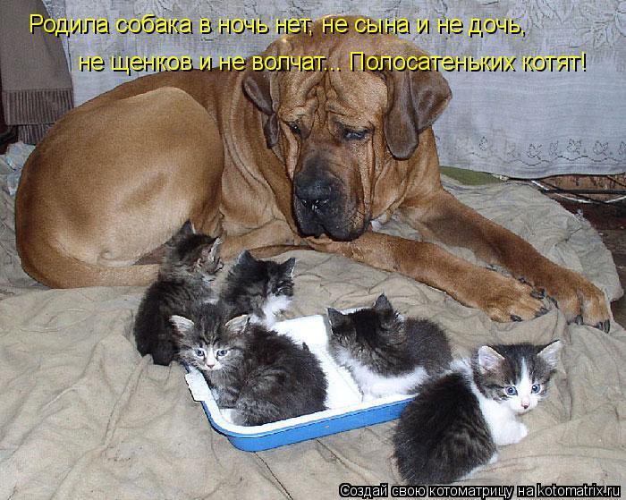 Котоматрица: Родила собака в ночь нет, не сына и не дочь,  не щенков и не волчат... Полосатеньких котят!