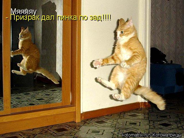 Котоматрица: Мяяяяу - Призрак дал пинка по зад!!!!