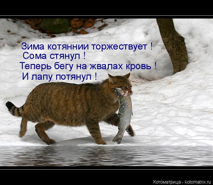 Котоматрица: Зима котяннии торжествует ! Сома стянул ! Теперь бегу на жвалах кровь ! И лапу потянул !