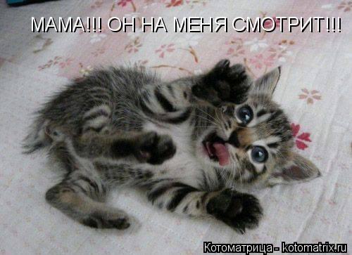 Котоматрица: МАМА!!! ОН НА МЕНЯ СМОТРИТ!!!