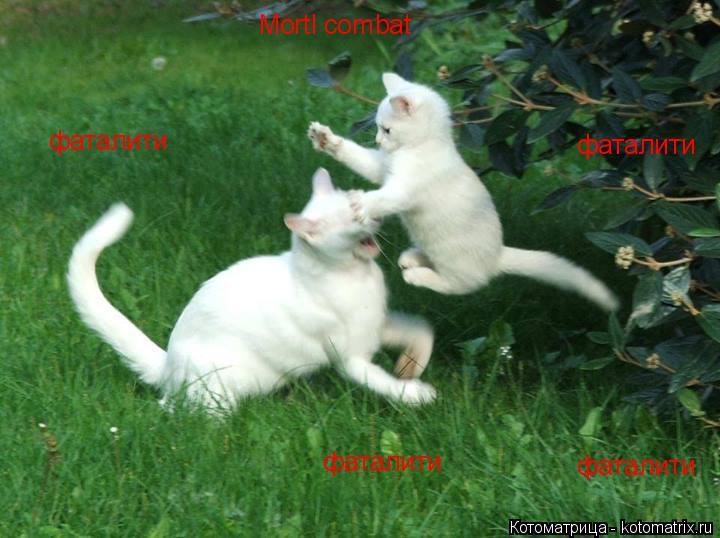 Котоматрица: Mortl combat    фаталити фаталити фаталити фаталити