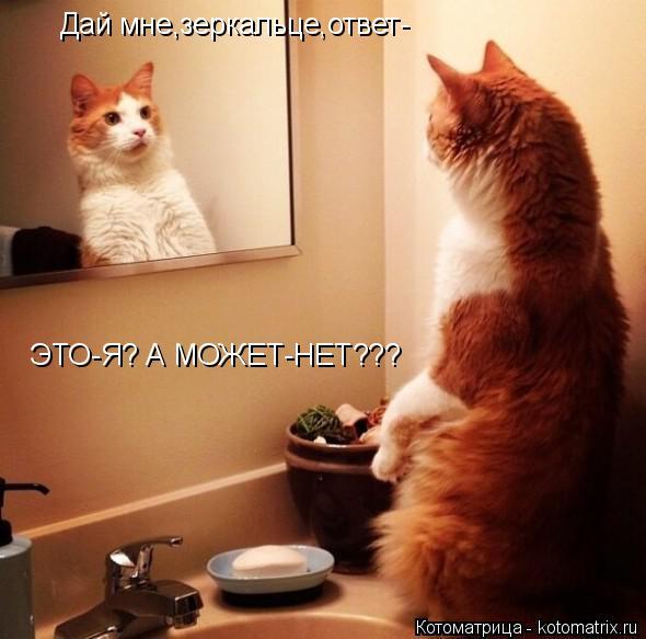Котоматрица: Дай мне,зеркальце,ответ- ЭТО-Я? А МОЖЕТ-НЕТ???
