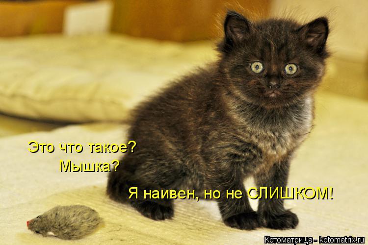Котоматрица: Это что такое? Мышка? Я наивен, но не СЛИШКОМ!