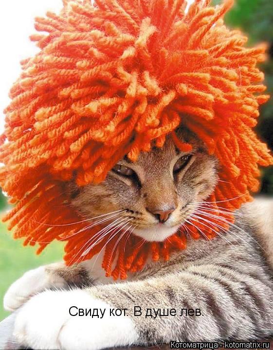 Котоматрица: Свиду кот. В душе лев.