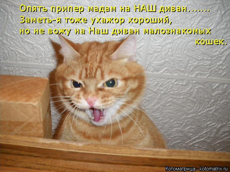Котоматрица: Опять припер мадам на НАШ диван. Заметь-я тоже ухажор хороший, но не вожу на Наш диван малознакомых кошек. ......