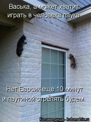 Котоматрица: Васька, а может хватит играть в человека паука Нет Барсик еще 10 минут и паутиной стрелять будем.