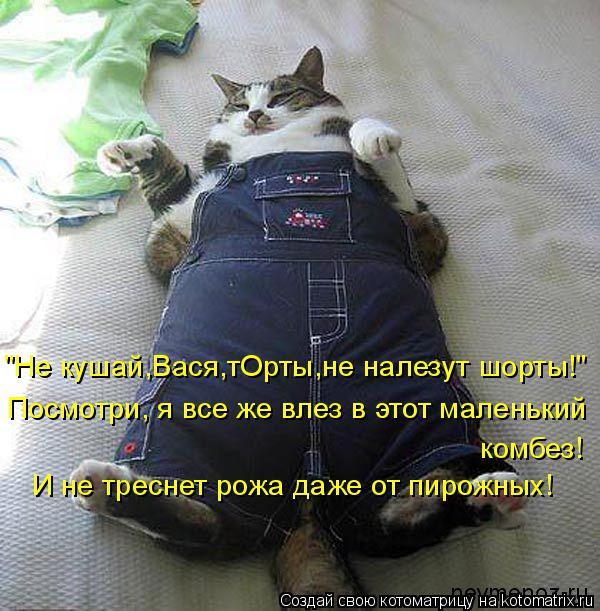 """Котоматрица: """"Не кушай,Вася,тОрты,не налезут шорты!"""" Посмотри, я все же влез в этот маленький комбез! И не треснет рожа даже от пирожных!"""