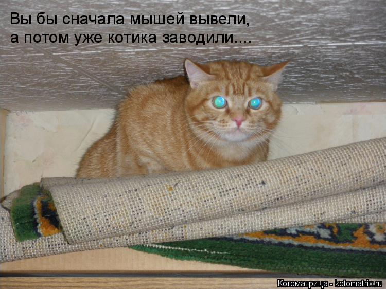 Котоматрица: Вы бы сначала мышей вывели , а потом уже котика заводили....