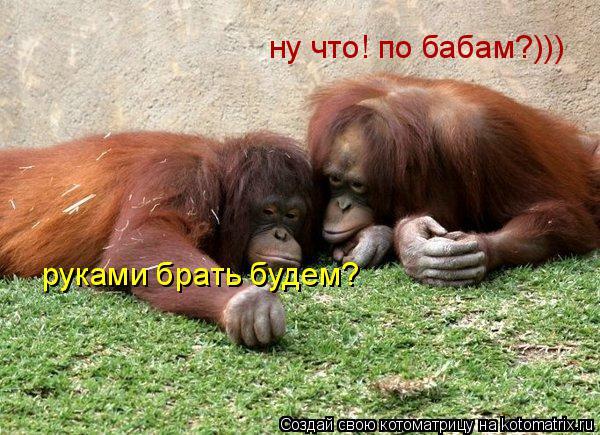 Котоматрица: ну что! по бабам?))) руками брать будем?