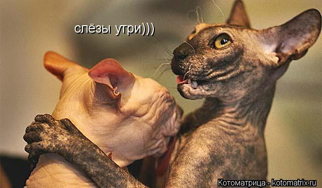 Котоматрица: слёзы утри)))