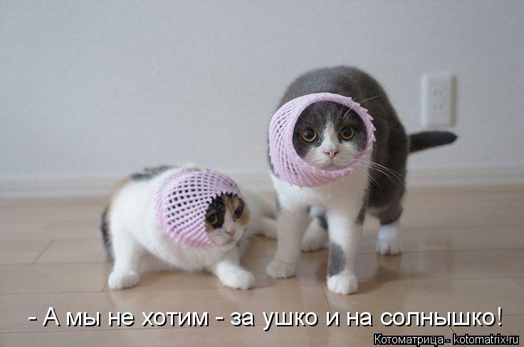 Котоматрица: - А мы не хотим - за ушко и на солнышко!