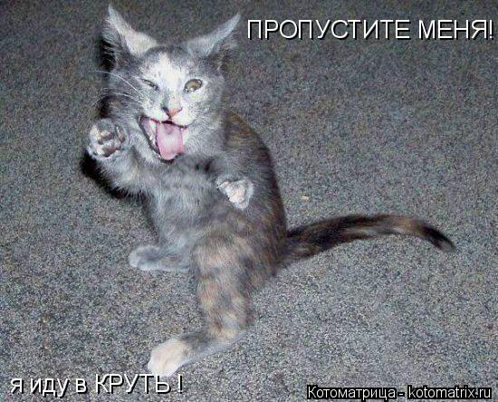 Котоматрица: ПРОПУСТИТЕ МЕНЯ! я иду в КРУТЬ !