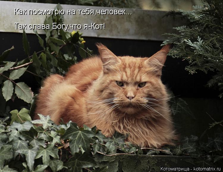 Котоматрица: Как посмотрю на тебя,человек...  Так слава Богу,что я-Кот!