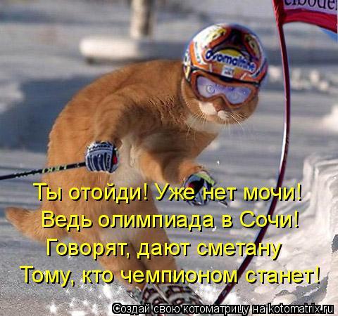 Котоматрица: Ты отойди! Уже нет мочи! Ведь олимпиада в Сочи! Говорят, дают сметану Тому, кто чемпионом станет!