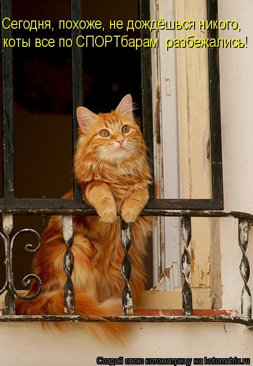 Котоматрица: Сегодня, похоже, не дождёшься никого, коты все по СПОРТбарам  разбежались!