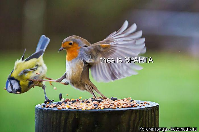 Котоматрица: thes is SPARTA thes is SPARTA