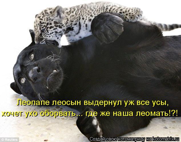 Котоматрица: Леопапе леосын выдернул уж все усы, хочет ухо оборвать... где же наша леомать!?!