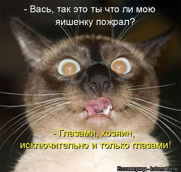 Котоматрица: - Глазами, хозяин,  исключительно и только глазами! - Вась, так это ты что ли мою  яишенку пожрал?