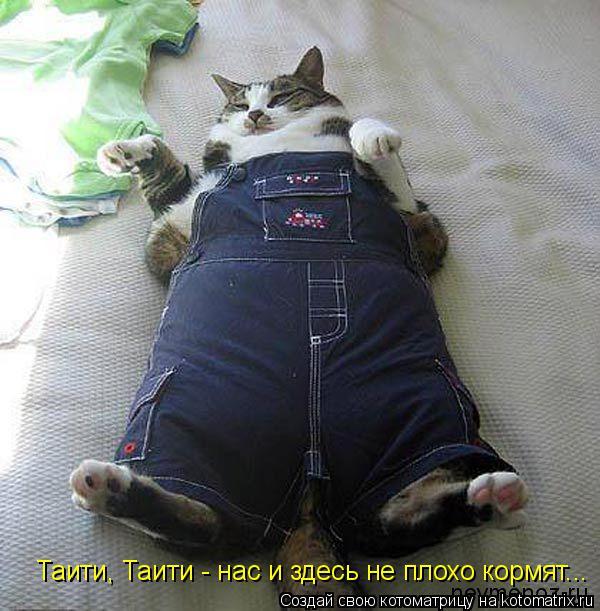 Котоматрица: Таити, Таити - нас и здесь не плохо кормят...