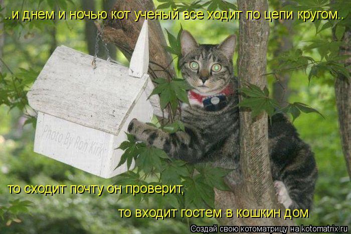 Котоматрица: то сходит почту он проверит, ..и днем и ночью кот ученый все ходит по цепи кругом.. то входит гостем в кошкин дом