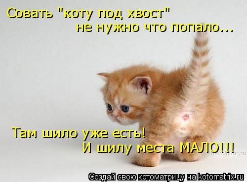 """Котоматрица: Совать """"коту под хвост"""" не нужно что попало... Там шило уже есть! И шилу места МАЛО!!!"""