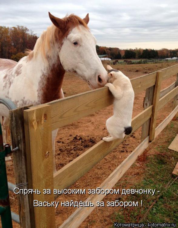 Котоматрица: Спрячь за высоким забором девчонку -  Ваську найдёшь за забором !