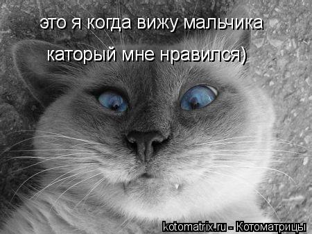 Котоматрица: это я когда вижу мальчика  каторый мне нравился) каторый мне нравился)