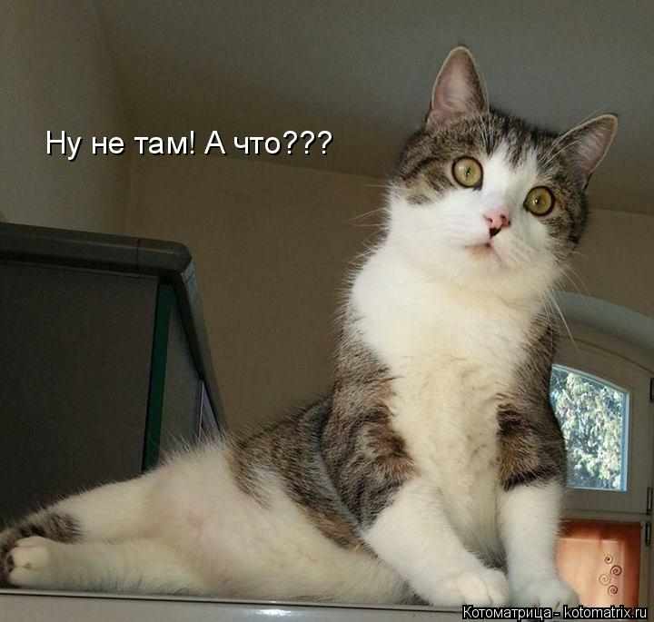 Котоматрица: Ну не там! А что???