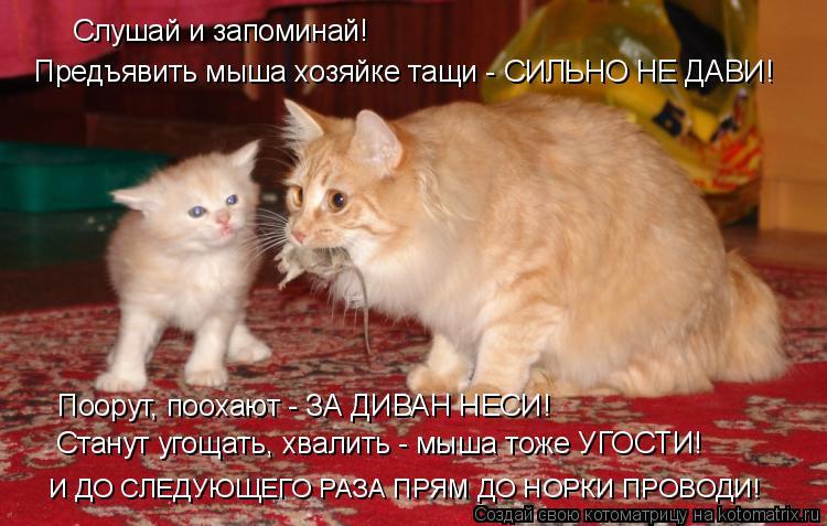Котоматрица: Слушай и запоминай! Поорут, поохают - ЗА ДИВАН НЕСИ! Станут угощать, хвалить - мыша тоже УГОСТИ! И ДО СЛЕДУЮЩЕГО РАЗА ПРЯМ ДО НОРКИ ПРОВОДИ! Пр