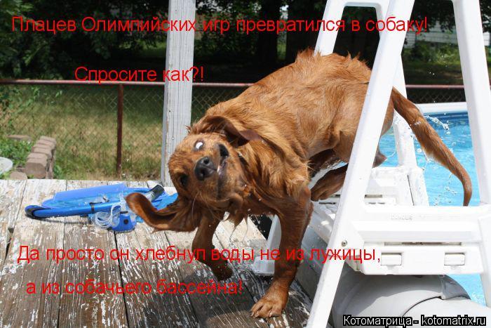 Котоматрица: Плацев Олимпийских игр превратился в собаку! Спросите как?! а из собачьего бассейна! Да просто он хлебнул воды не из лужицы,